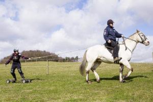 horse-boarding_1