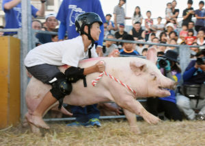 pig_rodeo