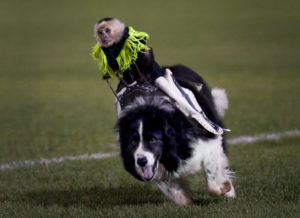rodeo_monkey_dog