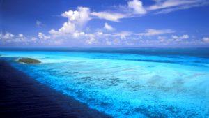 Океан - богатый подводный мир