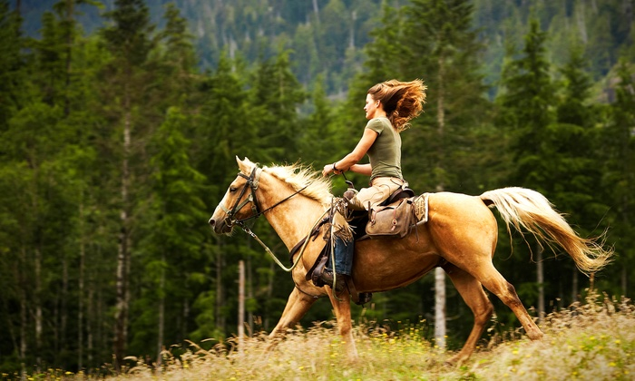 Что такое конный спорт?