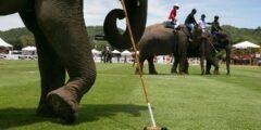 Поло на слонах
