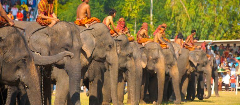 Ежегодный Фестиваль слонов в Сурине (Таиланд)