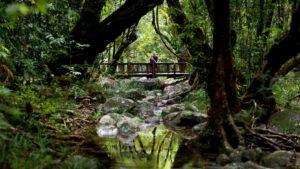 Лесной туризм