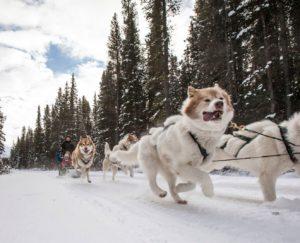 Гонки на собачьих упряжках