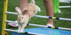 Канинхоп: прыжки для кроликов
