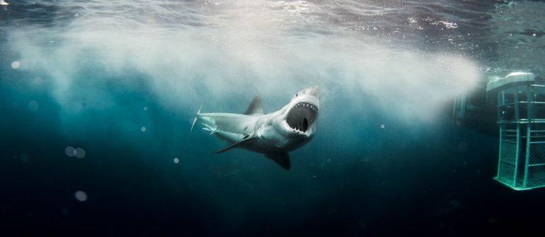 Серфинг с акулой