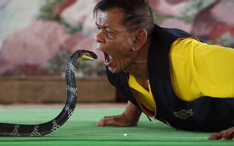 Бокс с ядовитыми кобрами