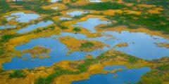 Васюганские болота – история и особенности туризма