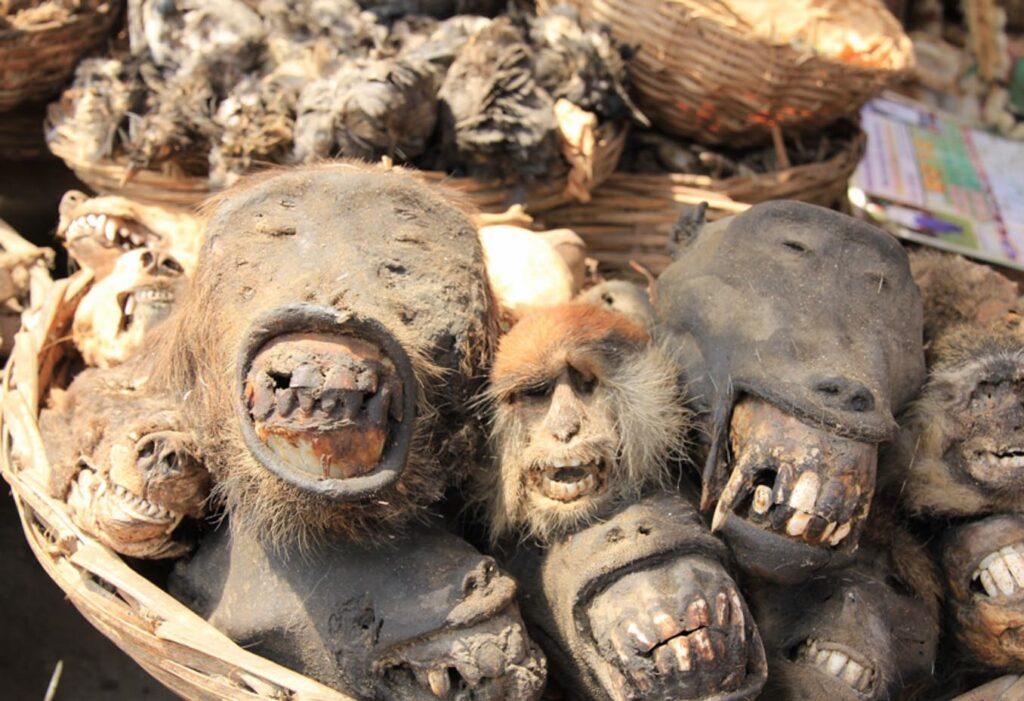 Экстремальный туризм в Бенине