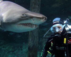 Экстремальный дайвинг с белыми акулами