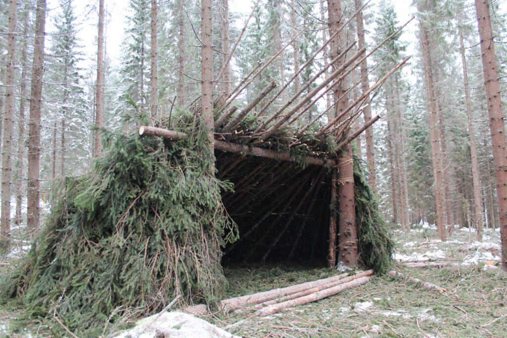 Как выжить в лесу, если вы заблудились?