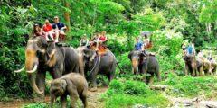 Треккинг на слонах