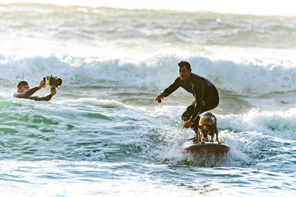 Серфинг с собаками