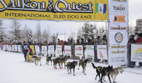 Юкон Квест (Yukon Quest)