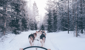 Берингия (Beringia)(гонка на собачьих упряжках)