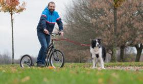 Дог-скутеринг (Собакатство, Dog scootering)