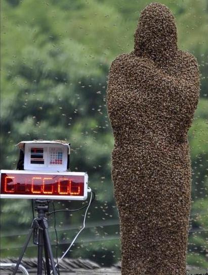 Пчелиный конкурс в Китае